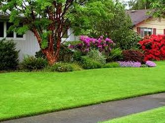 Your Lawn