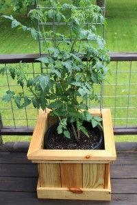 tomato-bucket-planter